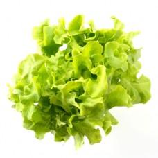 Салат листовой - 7.00 лей / 100г